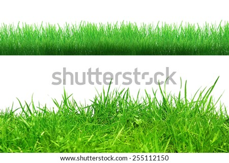 Different grass on the white background - stock photo