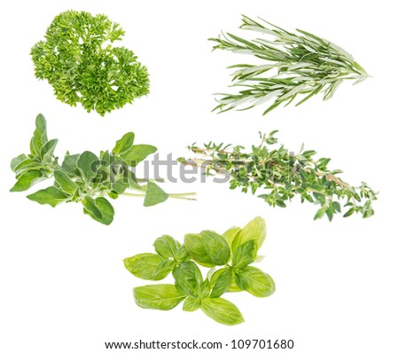 Different Herbs isolated on white background - stock photo