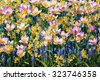 Different Kinds of Flowers - stock photo