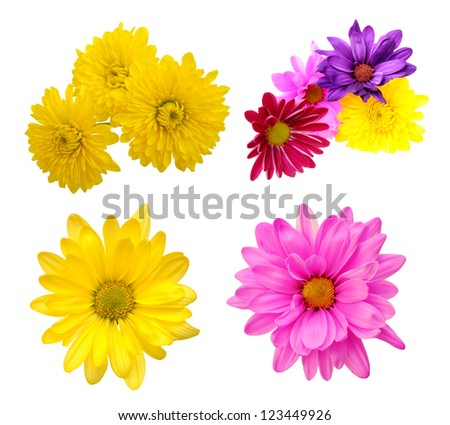 Different kinds flowers isolated on white stock photo royalty free different kinds of flowers isolated on white background mightylinksfo