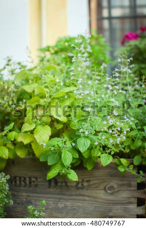 Different kinds of herbs grow outdoors in a wooden box. Also available in horizontal format.