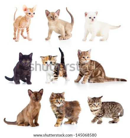 Different kittens collection - stock photo