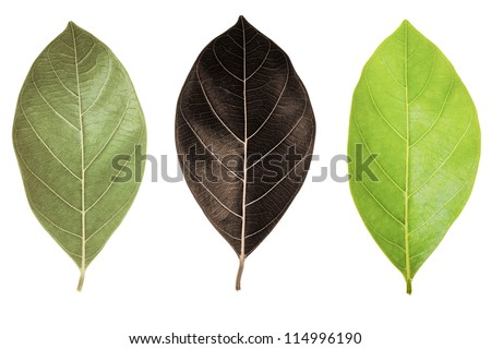 different leaf - stock photo