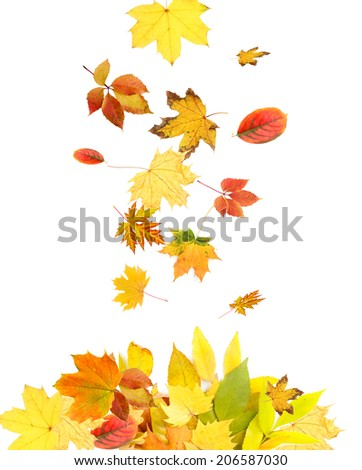 Different leaves isolated on white - stock photo