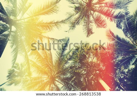 Different palm trees, view from ground, vintage stylized with film light leaks - stock photo