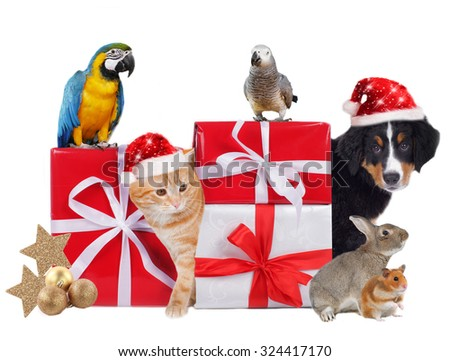 Different pets with christmas parcels isolated - stock photo