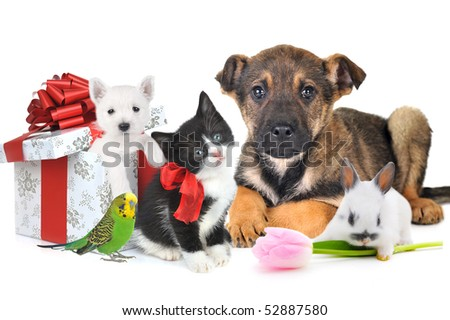 different pets with gift box and flower together - stock photo