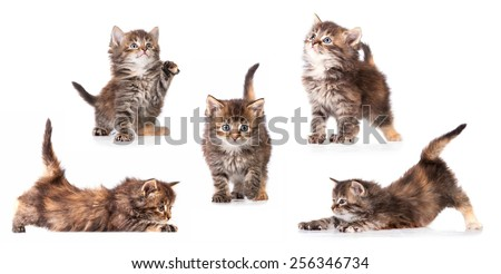 Different pictures of little tabby kitten  - stock photo