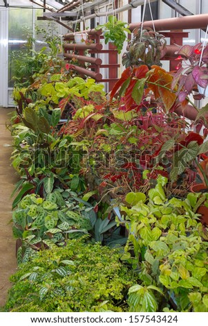 different plants in a greenhouse