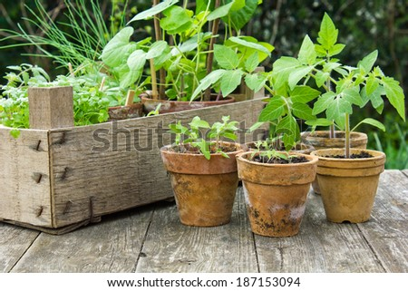 Different plants in flower pots/plantings/plants - stock photo