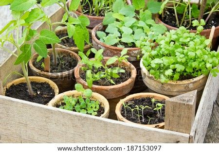Different plants in flower pots/plantings/plants