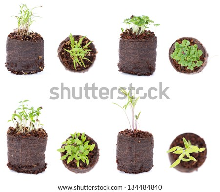 Different Plants (seedlings) isolated on white background - stock photo