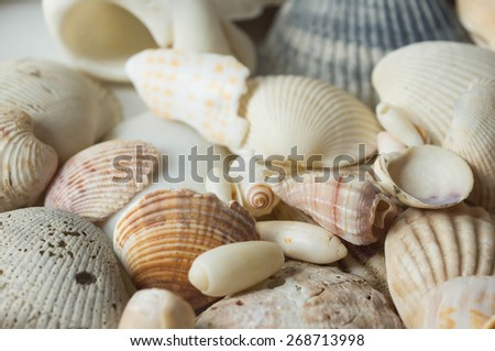 Different sea shells close up