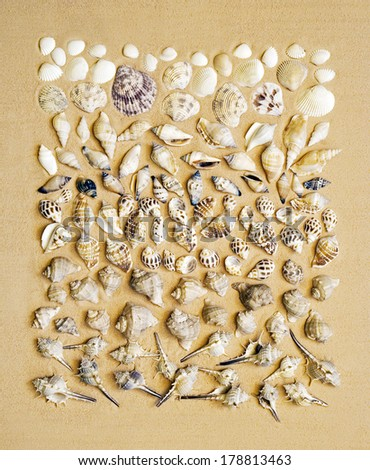 Different sea shells collection on the sand