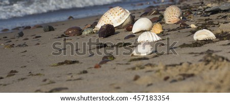 Different shells on the sand, sea background and texture