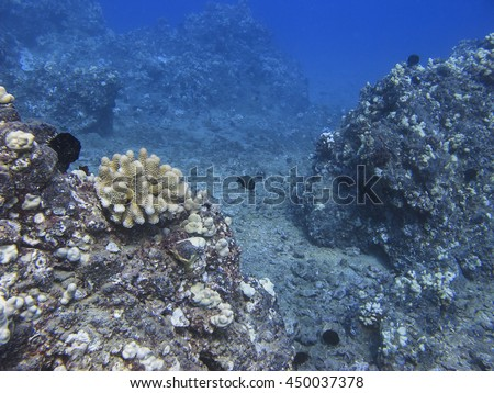 different species of fish in a pacific ocean coral reef - stock photo