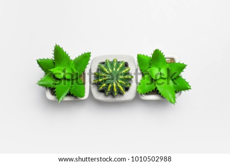 Different succulents and cactus in pots on light background