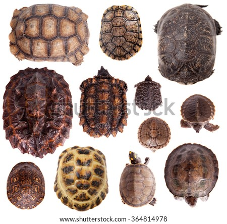 Different Tortoiseshells isolated on the white background - stock photo