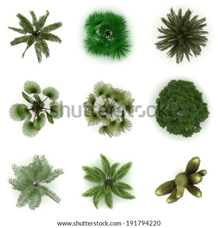 Different trees from top view - stock photo