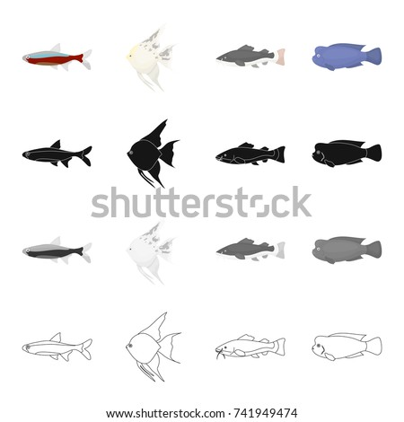 Different Fish Shape Stock Images Royalty Free Images