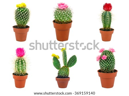 different types of cactus isolated on white background - stock photo