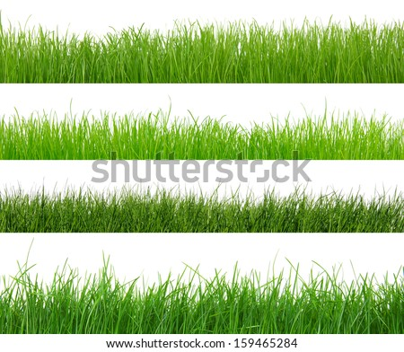 Different types of green grass  - stock photo