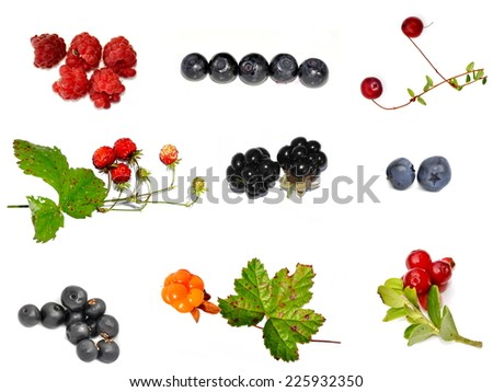 Different wild berries on white background - stock photo