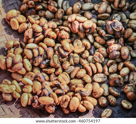 Digested Coffee beans from Luwak (civet cat poop) : Process of Luwak Coffee