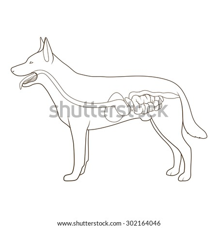 Dog Diagram No Labels Product Wiring Diagrams