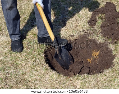 Digging the hole for planting tree in garden - stock photo