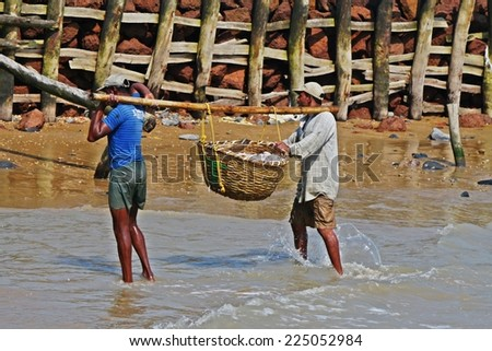 Digha - SEPTEMBER 27: Fishermen bring their basket full of fishes from sea on September 27, 2014 in Digha, India - stock photo