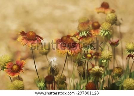 Digital art, paint effect, Echinacea Sombrero Salsa Red (Coneflower) - stock photo