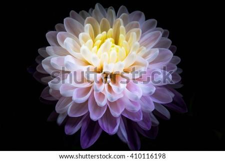 digital art: shiny flower against black background - stock photo