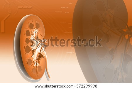 Digital illustration of Cross Section kidney in color background  - stock photo