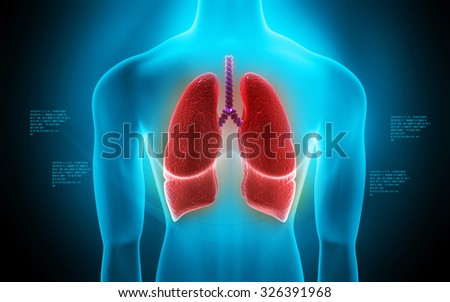 Digital illustration of human lungs in colour background - stock photo