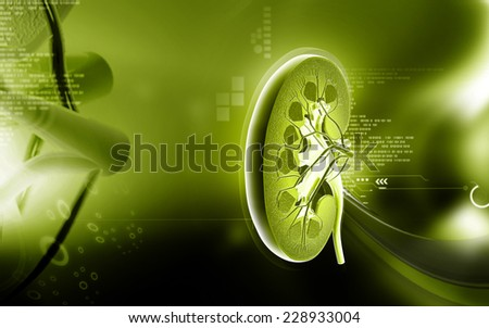 Digital illustration of kidney in colour background  - stock photo