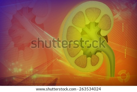 Digital illustration of  kidney in colour  background  - stock photo