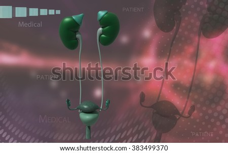 Digital illustration of Kidneys and urinary bladder in colour background  - stock photo