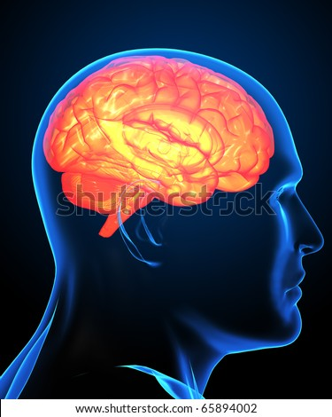 Digital image of a human brain in x-ray - stock photo