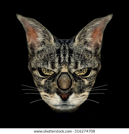 Digital manipulation photo technique angry cat foreground steam punk portrait in black background