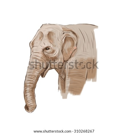 Digital Painting, Asian Elephant