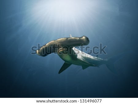 Digital painting of a large scalloped hammer head shark.