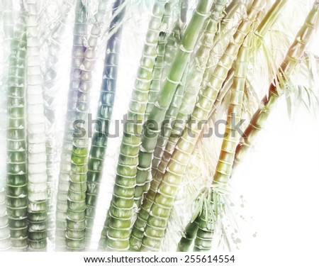 Digital Painting Of Bamboo Forest - stock photo