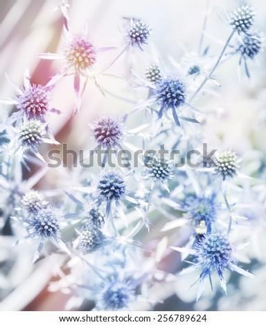 Digital Painting Of Blue Flowers.Soft Focus - stock photo