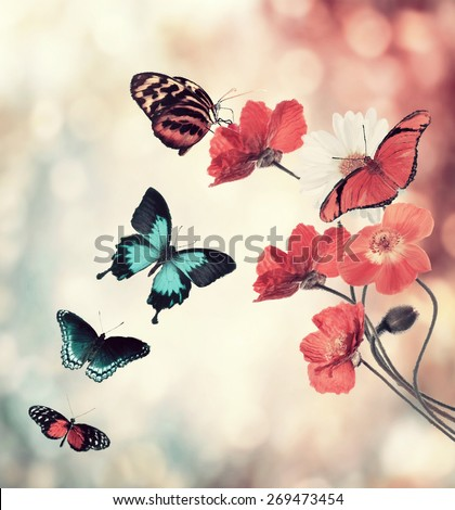 Digital Painting Of Flowers And Butterflies - stock photo