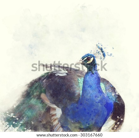 Digital Painting Of Indian Peafowl - stock photo