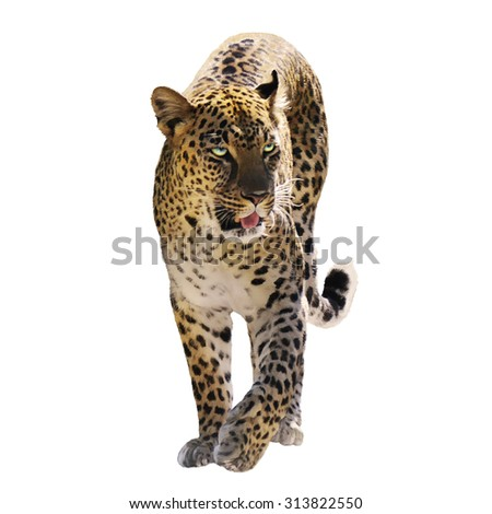 Digital Painting Of Leopard Isolated on White Background - stock photo