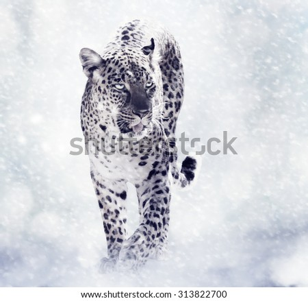 Digital Painting Of Leopard Walking in the Snow - stock photo