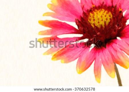 Digital Painting of macro closeup pink and yellow Indian blanket or firewheel flower in bloom in spring - stock photo