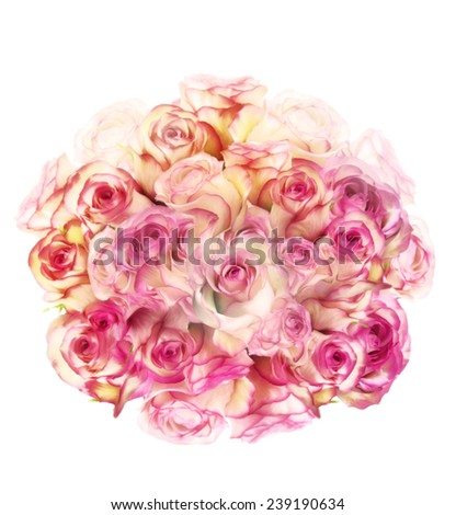 Digital Painting Of Rose Flowers On White Background - stock photo
